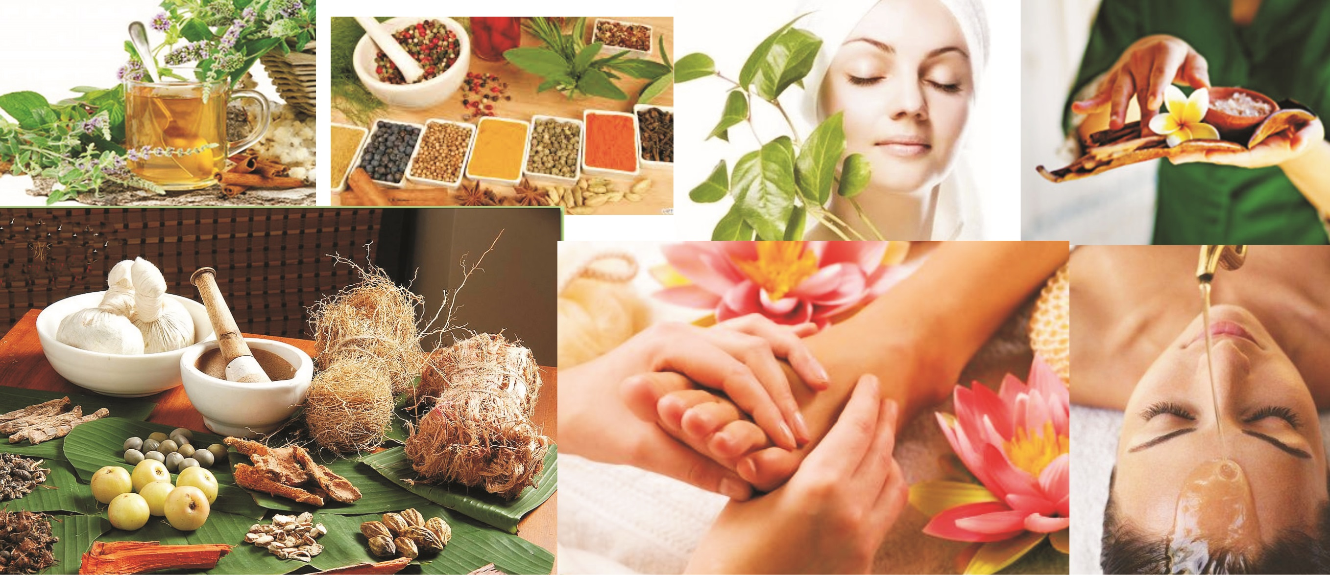 Diploma in Pharmacy-UP Vaid (Ayurvedic)